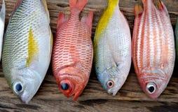 Pescados frescos coloridos de la mezcla Foto de archivo libre de regalías