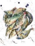 Pescados frescos de la acuarela Imagenes de archivo
