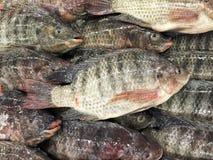 Pescados frescos de la Tilapia del Nilo en mercado de pescados Fotografía de archivo
