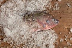 Pescados frescos de Nilotica de los pescados del mango de la Tilapia del Nilo en el hielo y los vagos de madera Foto de archivo libre de regalías
