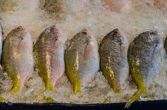 Pescados frescos del â del mercado de los mariscos Foto de archivo libre de regalías