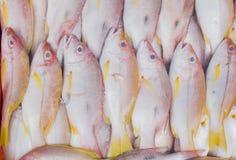 Pescados frescos del pargo rojo en el mercado foto de archivo