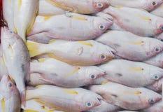 Pescados frescos del pargo rojo en el mercado fotos de archivo