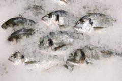 pescados frescos del sparus en la opini?n de top del hielo muchos pescados en el hielo que vende concepto imagen de archivo