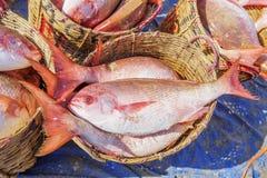 Pescados frescos en cesta en el mercado de pescados largo de Hai Fotografía de archivo libre de regalías