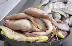 Pescados frescos en el contador en el mercado, pescados de limpieza, mariscos Imágenes de archivo libres de regalías