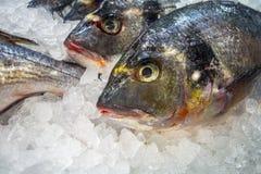 Pescados frescos en el hielo en el bajo del mercado fotografía de archivo libre de regalías