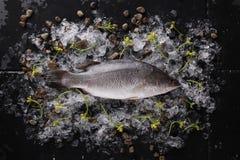 Pescados frescos en el hielo en una opinión de sobremesa de piedra negra Fotos de archivo libres de regalías