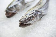 Pescados frescos en el hielo en mercado Imagen de archivo libre de regalías
