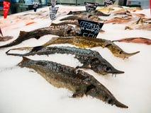 Pescados frescos en el hielo para la venta en mercado Imagen de archivo libre de regalías