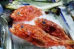 Pescados frescos en el hielo en el restaurante de los mariscos en Grecia imágenes de archivo libres de regalías