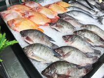 Pescados frescos en el hielo en el supermercado foto de archivo libre de regalías