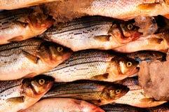 Pescados frescos en el mercado Imagenes de archivo