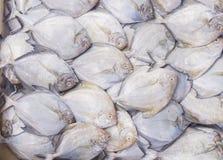 Pescados frescos en el mercado imagen de archivo