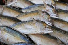 Pescados frescos en el mercado Fotografía de archivo libre de regalías