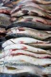 Pescados frescos en el mercado Fotos de archivo