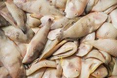 Pescados frescos en el mercado de pescados largo de Hai Foto de archivo libre de regalías
