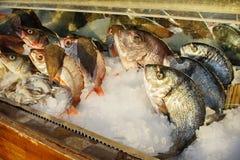 Pescados frescos en hielo foto de archivo libre de regalías