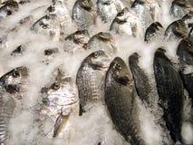 Pescados frescos en hielo. Fotografía de archivo