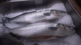 Pescados frescos en hielo en el mercado contrario almacen de metraje de vídeo