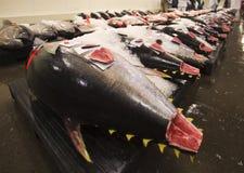 Pescados frescos en la subasta diaria del mercado Fotografía de archivo libre de regalías