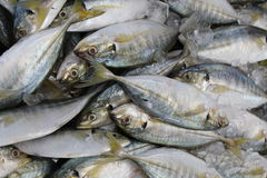 Pescados frescos en mercado Fotos de archivo