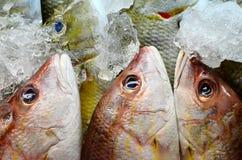 Pescados frescos en mercado Imagen de archivo libre de regalías