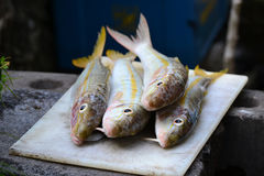 Pescados frescos Foto de archivo