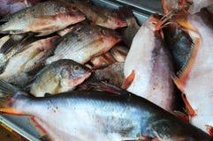 Pescados frescos en un mercado mojado foto de archivo