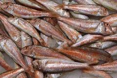 Pescados frescos en un mercado tradicional en Catalu?a foto de archivo