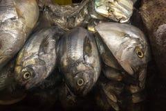 Pescados frescos en una parada del mercado foto de archivo libre de regalías
