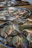 Pescados frescos en venta en un mercado local Fotografía de archivo