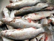 Pescados frescos para cocinar Fotos de archivo libres de regalías