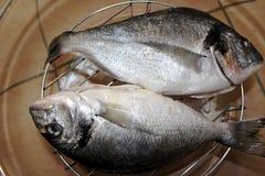 Pescados frescos, pescados no cocinados, pescados purificados, Imagen de archivo