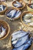 Pescados frescos y atún en cesta en la playa Fotografía de archivo libre de regalías
