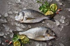 Pescados frescos y crudos, pescados de Dorada, brema de mar, brema de mar de la cerda-cabeza con hielo, limón e hierbas en un fon fotos de archivo