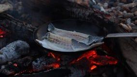 Pescados fritos cacerola sobre los carbones calientes almacen de video