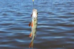 Pescados fuera del agua Fotografía de archivo libre de regalías