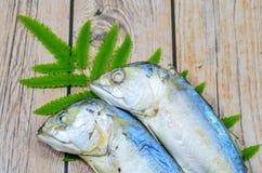 Pescados gemelos Foto de archivo libre de regalías