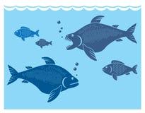 Pescados grandes Imagen de archivo libre de regalías