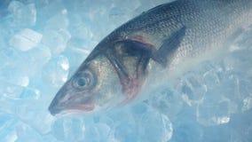 Pescados grandes congelados con el vapor helado almacen de metraje de vídeo