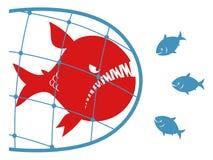 Pescados grandes en una red de pesca Imagen de archivo