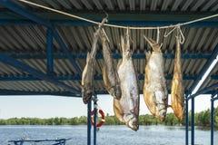 Pescados grandes ide del río que me seco en la sombra en la cuerda foto de archivo libre de regalías