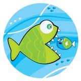 Pescados grandes que comen un pequeño pescado Imagen de archivo libre de regalías