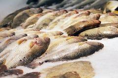 Pescados helados Foto de archivo libre de regalías