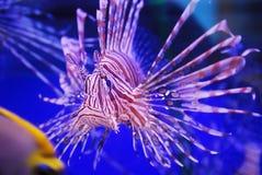 Pescados hermosos Imagenes de archivo