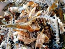 Pescados huesudos Fotos de archivo