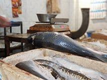 Pescados listos para ser vendido a los clientes imagen de archivo