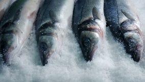 Pescados llenos en el hielo que sigue el tiro almacen de metraje de vídeo