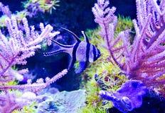 Pescados marinos del acuario Fotos de archivo libres de regalías